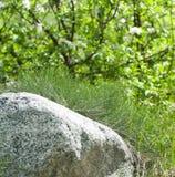 Ephedra είναι ένα γένος gymnosperm των θάμνων, το μόνο γένος στο φ του στοκ εικόνες
