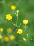 Ephemera в траве стоковые изображения rf