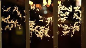 Ephemera hainanensis - mayfly or also known as fish flies, shad flies or up-winged flies. Mayflies swarming around street lights a. T night time in the city stock footage