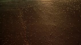Ephemera hainanensis - mayfly or also known as fish flies, shad flies or up-winged flies. Mayflies swarming on the ground around s. Treet lights at night time stock video
