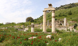 Ephesus. Detail of ancient ruins in Ephesus, Turkey Royalty Free Stock Photos