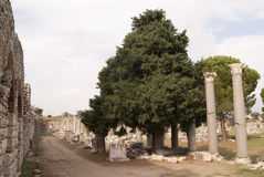 Ephesus street with the columns Royalty Free Stock Photography