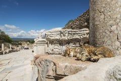 Ephesus Stock Photos