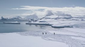 Epic antarctic landscape penguin group aerial view stock video footage