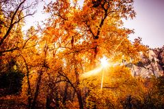Epic Arizona South West fall trees changing of color, Sedona. royalty free stock photos