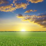 Epic bright dawn over corn field. Royalty Free Stock Images