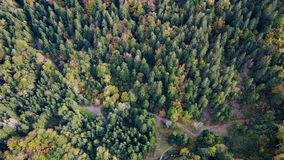 Trees from above Stock Image