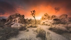 Epic Dry Desert Sunset Over Joshua Tree National Park Boulders and Tall Grass. Dark orange and yellow colors spread across the sky with muted tones in the royalty free stock photos