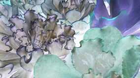 Epic Echeverias Stock Photo
