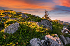 Epic landscape in Carpathian high mountain ridge. Epic landscape of Carpathian high mountain ridge. lonely spruce tree among huge rocks on grassy hillside Royalty Free Stock Photos