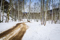 Epic Pastoral Winter Landscape. Epic and beautiful natural landscape in the season of winter with lots of natural details from diversity of vegetation to walking Royalty Free Stock Images