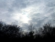 Epic Sky Above a Dark Forest royalty free stock photo