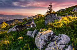 Epic sunrise in high mountain ridge. Epic sunrise on high mountain ridge. lonely spruce tree among huge rocks on grassy hillside. gorgeous vewpoint with hill and Royalty Free Stock Photos