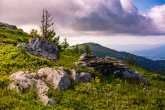 Epic sunrise in high mountain ridge. Epic sunrise on high mountain ridge. lonely spruce tree among huge rocks on grassy hillside. gorgeous vewpoint with hill and Stock Image