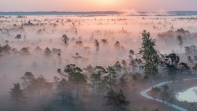 Epic sunrise time lapse in a foggy wetland national park. Time lapse of the Sun rising and thick fog flowing over the wetlands of Ķemeri National Park, Latvia stock video footage