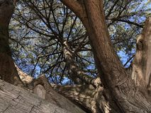 Epic Tree. AtTooradin foreshore tree Royalty Free Stock Photos