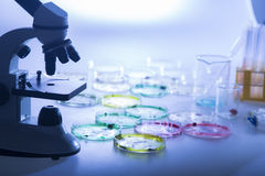 Epidemic. A microscope with petri dishes with growth Stock Image