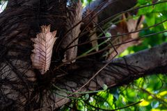 Epifity paprociowi na du?ym drzewie zdjęcia stock