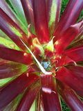Epifyt-soort; Epiphyte-Spezies (Santa Marta Mountains, Kolumbien) stockfotografie