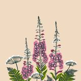 Epilobium angustifolium, Angelica, Polypodiophyta. Card with forest and meadow plants. Angelica, fern, fireweed. Flowering plants. Summer theme. Vector Stock Photos