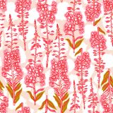 Epilobium angustifolium, Angelica, Polypodiophyta. Seamless pattern with flowering plant fireweed. Traditional Russian tea. Medica. L useful plant. Botanical Stock Photos