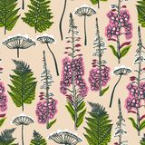 Epilobium angustifolium, Angelica, Polypodiophyta. Seamless pattern with forest and field plants and flowers. Angelica, fern, fire. Weed. Background with medical Royalty Free Stock Image