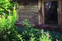 Epilobium near the derelict rural house Stock Images