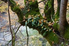 epiphyte种植生长在树干的青苔和蕨 免版税图库摄影