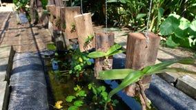 Epiphyte d'orchidée Photo stock