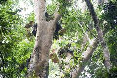 Epiphyte que cresce na floresta úmida fotografia de stock royalty free