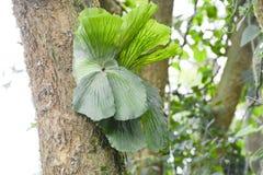 Epiphyte som växer på en stam Arkivbild