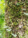 Epiphyte on tree in green tropical garden. Show business concept of dependency, support, and relaxation Stock Photography