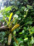 Epiphytes στοκ εικόνες
