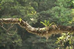 Epiphytes stock afbeeldingen