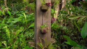 Epiphytes d'usines qui se développe souvent sur de plus grands arbres dans des climats tropicaux et subtropicaux dans un jardin t clips vidéos
