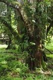 Epiphytes eller växter som fullvuxet på växter, var gemensam i ett tropiskt ekosystem royaltyfria foton