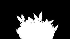 Epiphytic cactus. White schlumbergera flower buds ALPHA matte, FULL HD. (Schlumbergera Bridgesii) stock video footage