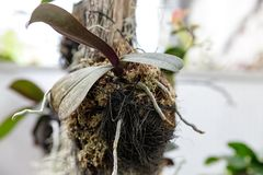 Epiphytic plants attached to trees stock photos