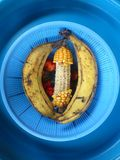 A EPIS OF MAIZE TOOTHLESS SURROUNDED BY TWO BANANAS Stock Photo