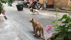 Episk kamp mellan hunden och katten på gatan utanför lager videofilmer
