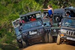 Epizodu safari w Yala parku narodowym Sri Lanka Zdjęcia Stock