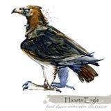 Epoki Lodowcowej przyroda prehistoryczne okres fauny Haasts Eagle royalty ilustracja