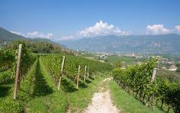Eppan södra Tyrolean vinrutt, Italien Royaltyfria Foton