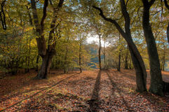epping的森林 图库摄影