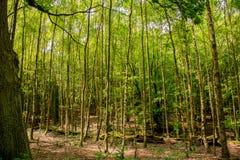 epping δάσος Στοκ εικόνα με δικαίωμα ελεύθερης χρήσης