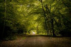epping δάσος Στοκ Εικόνες