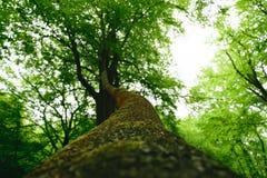 epping δάσος Στοκ Φωτογραφίες