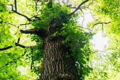epping δάσος Στοκ Εικόνα