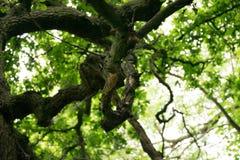 epping δάσος Στοκ φωτογραφία με δικαίωμα ελεύθερης χρήσης