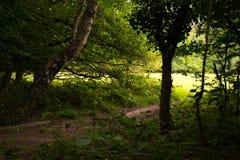 epping δάσος Στοκ φωτογραφίες με δικαίωμα ελεύθερης χρήσης